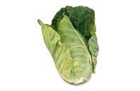Zelí špičaté salátové